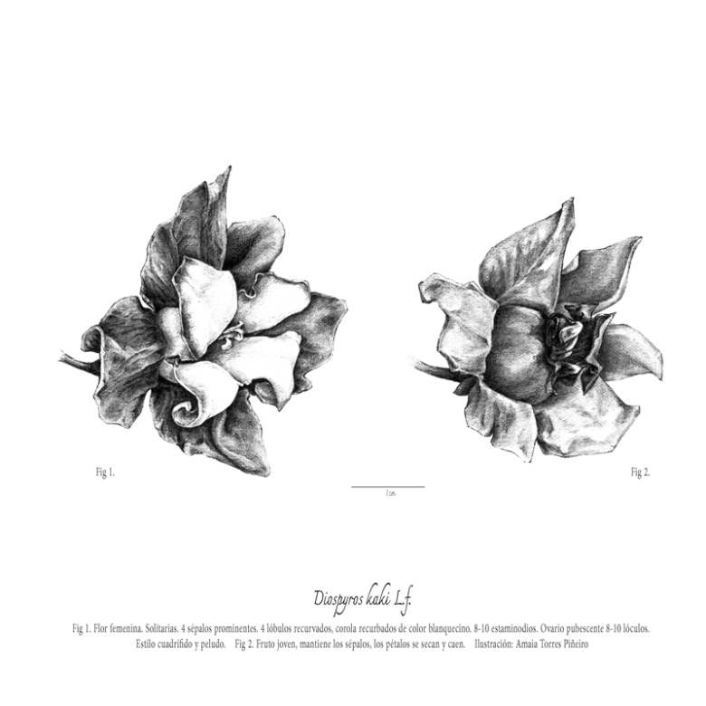 ARBORETUM_flor-femeninaweb