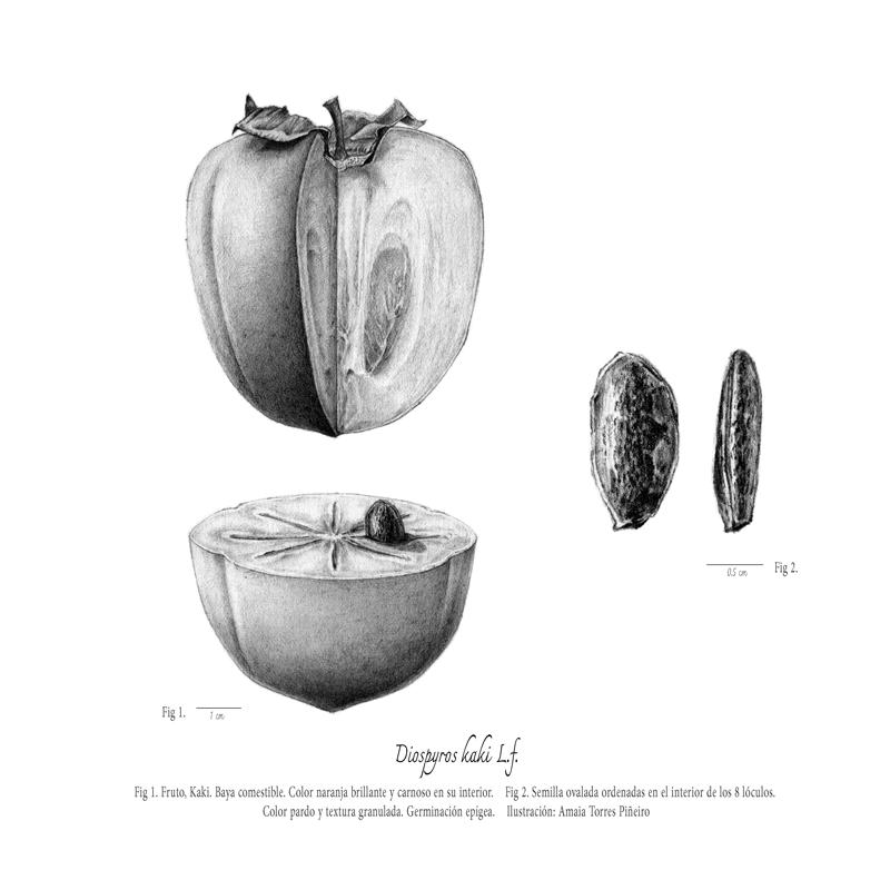 ARBORETUM_frutoweb